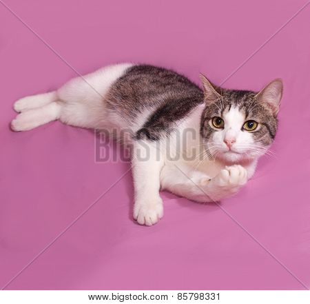 White And Striped Kitten Plays On Pink