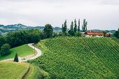 stock photo of farmhouse  - Vineyard in Southern Styria with typical Farmhouse - JPG