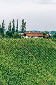 picture of farmhouse  - Farmhouse in Southern Styria with Vineyard and copyspace - JPG