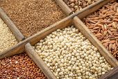 picture of sorghum  - sorghum and other gluten free grains in a wooden rustic box - JPG