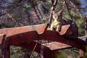 foto of gazebo  - Tabby cat lying on the gazebo and enjoying the sunshine - JPG