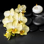 stock photo of yellow orchid  - beautiful spa setting of yellow orchid phalaenopsis and candle on black zen stones with drops closeup - JPG