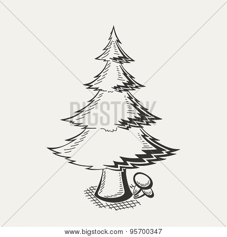 Illustration of spruce on white background.