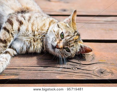 Tabby cat lying on a wood, bright colours