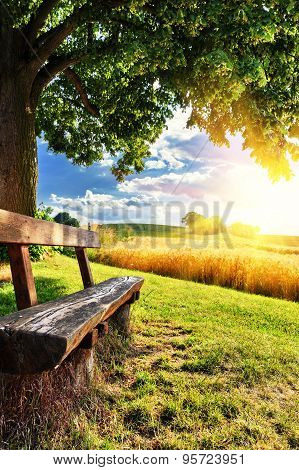 Beautiful Summer Landscape With Wooden Bench