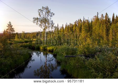 Summer Sunset In The Karelian Forest. Russia