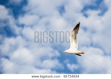 Seagull Flying To The Left On A Blue Sky With White Clouds