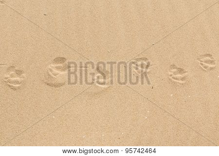 Sand texture - birds footsteps
