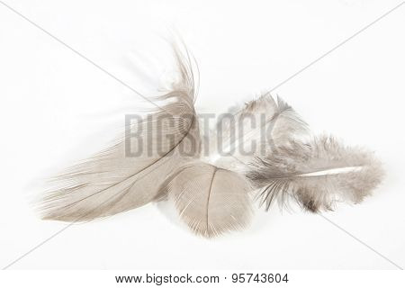 Four Fluffy Light Fine Textured Feathers On White