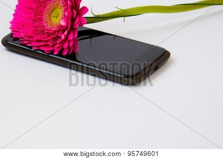 Pink Gerbera And Smartphone