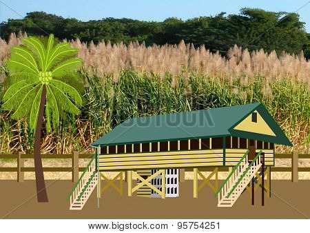 Old Wooden House Near Sugar Cane Field