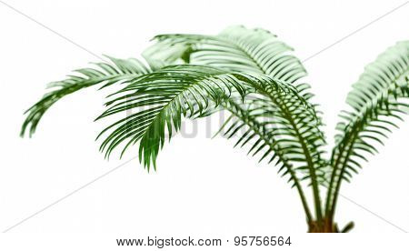 Green palm tree on light background