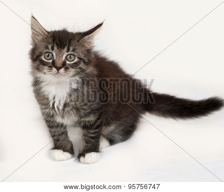 Siberian Fluffy Tabby Kitten Sitting On Gray