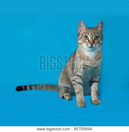 Grey Tabby Cat Sitting On Blue