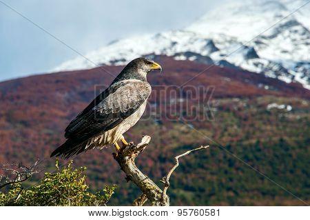 Patagonian Classic: Bird, Tree, Hill