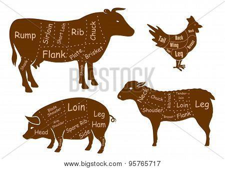 Beef, pork, chicken and lamb meat cuts