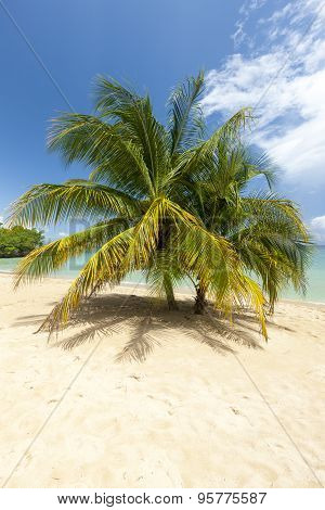 Beach on tropical island. Clear blue water, sand, palms.