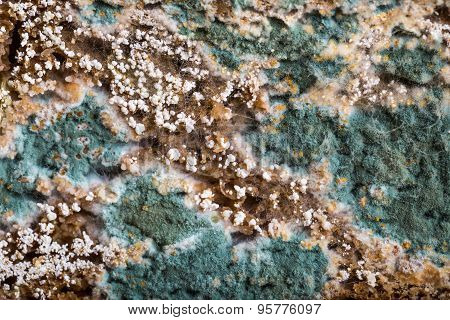 Moldy Brown Bread Background