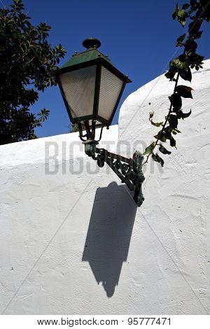 Plant Spain Street Lamp A Bulb