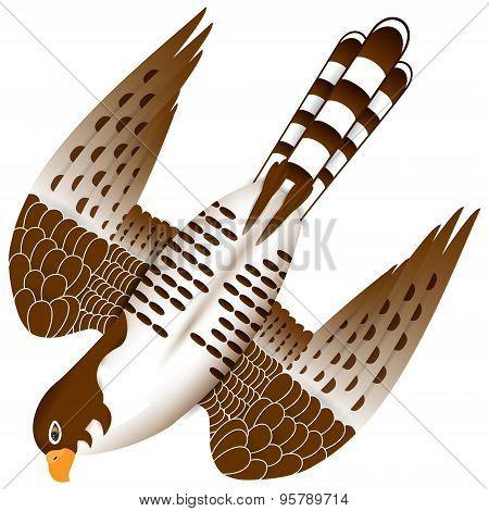 Falcon In Flight