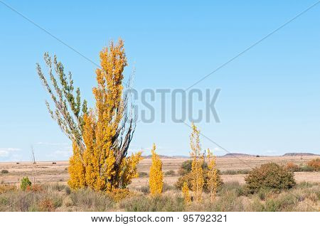 Autumn Country Scene In The Free State