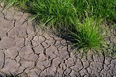 pic of dry grass  - detail of a dry land with grass - JPG