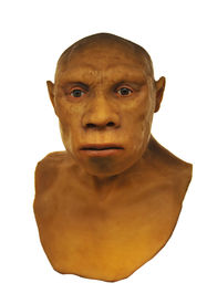 pic of cave-dweller  - Full scale model of the Neanderthal man face - JPG
