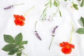 picture of nasturtium  - Fresh lavender and nasturtium flowers on a white background - JPG