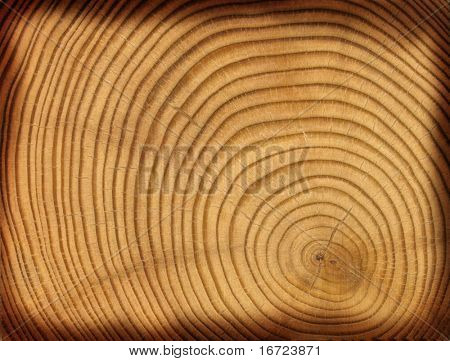 close-up wooden cut texture