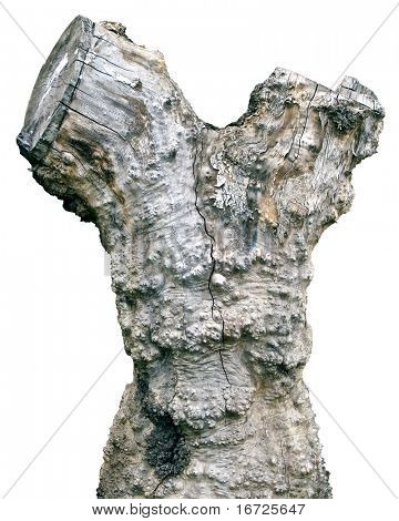Stump on the white background (isolated).