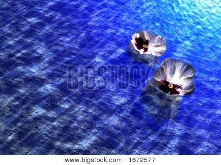 Flower Petals On Water