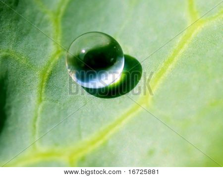 Dewdrop on a green leaf.
