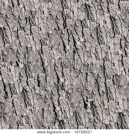 Bark seamless background.