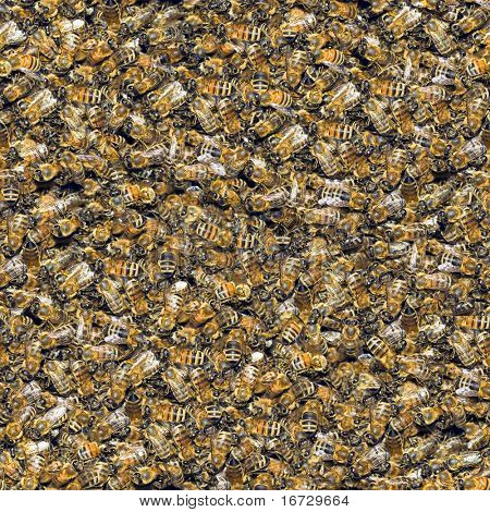 Bees seamless background. (See more seamless backgrounds in my portfolio).