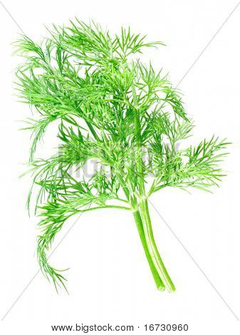 Dill bunch on white background (isolated).