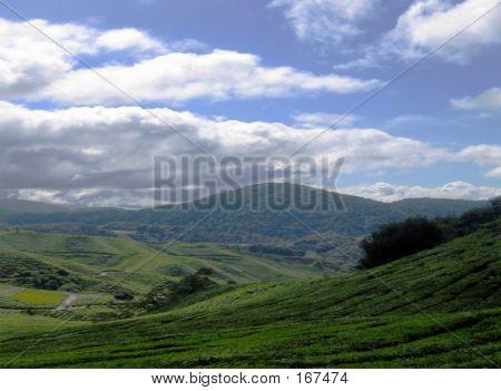 Sky & Land - Tea Plantation