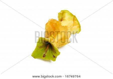 apple core on a white background