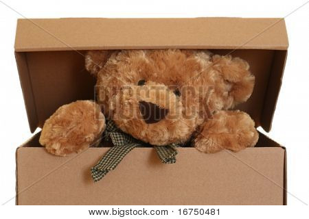 close-ups of cute teddy bear in box