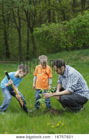 father and sons planting a tree - working together