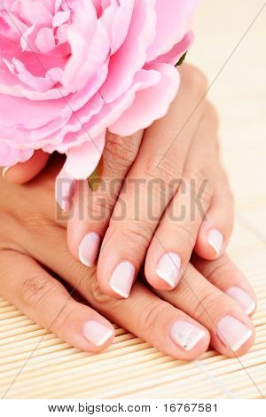beautiful female hands with pink rose - beauty treatment
