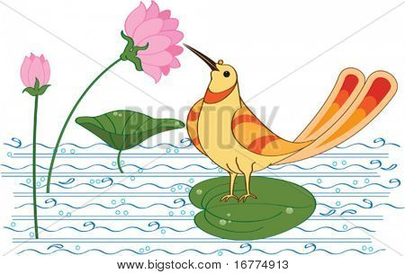 Bird is drinking nectar (sugar water) from Lotus flower in pond.