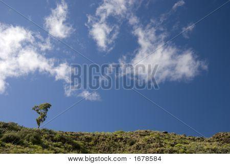 Solitary Eucalyptus Tree On The Horizon Against A Blue Sky 2