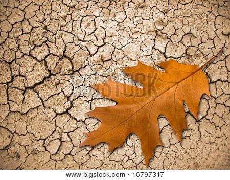 Oak leaf on cracked ground