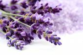 stock photo of white flower  - bunch of lavender flower isolated on white close - JPG