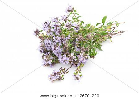 Herbal medicine:Thyme (Thymus serpillum)