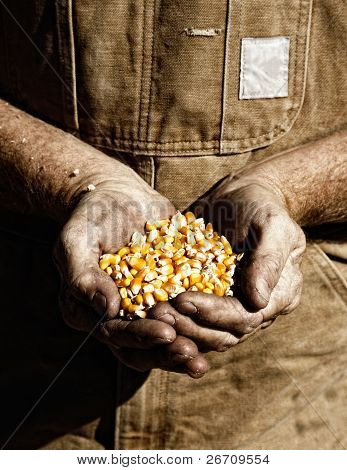 Corn and Farmer's Hands