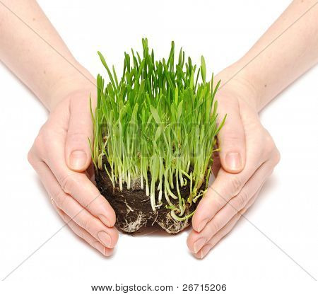 human hands holding green grass with ground isolated on white
