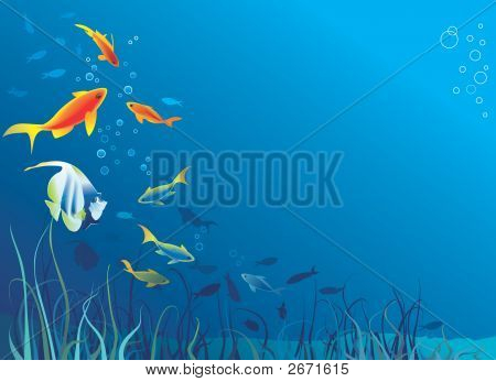 Underwater Life, Sea. Fish, Seaweeds