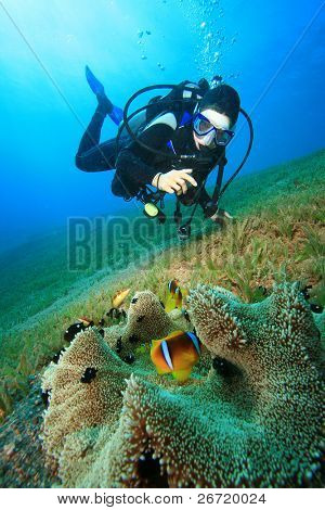 Scuba Diver photographs Anemonefish