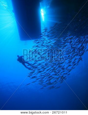 Diver and Shoal of fish silhouetted below dive boat